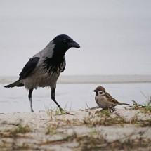 Детская игра — «Воробьи — Вороны»