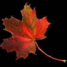 Развивающая детская игра — Закладки из листьев